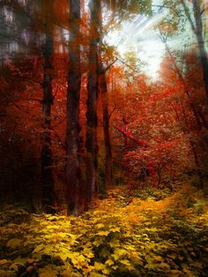 forêt d'automne par peter holme iii 16