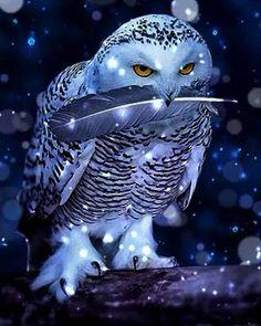 ZOOYA Omnidirectional Diy Diamond Painting Snow Owl Diamond Embroidery Cross Stitch Diamond Diamond Mosaic Painting Home Deco Owl Photos, Owl Pictures, Beautiful Owl, Animals Beautiful, Owl Calls, Animals And Pets, Cute Animals, Owl Artwork, Owl Wallpaper