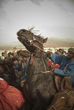 Prancing Stallion: Afghanistan