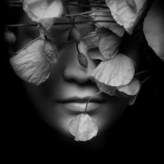 """""""I know a 'face' where the wild thyme blows, Where oxlips and the nodding violet grows, Quite over-canopied with luscious woodbine, With sweet musk-roses and with eglantine."""" William Shakespeare, A Midsummer Night's Dream."""