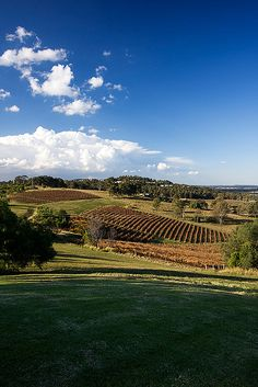 Hunter valley - Vineyard at Audrey Wilkinson - Sydney, Australia