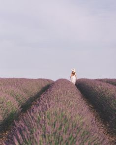The first time we came to Valensole we were late as they were all harvested the week before. This time around we thought we would be too early but alas! We arrived regardless of our doubts and were welcome with these fragrant purple blooms! I sure do love lavender season. It's the best smelling around! #lavender #provencelavender #gmgtravels #valensole #summerinfrance #france #endlesspurple #lavenderfields