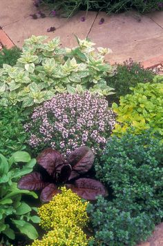 Herb garden combination plantings   Plant & Flower Stock Photography: GardenPhotos.com