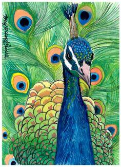 Peacock - watercolor by ©Anna Lee (via Etsy)