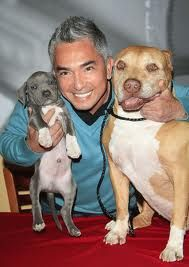 Daddy & Junior with Cesar Millan Cesar Millan, Cute Puppies, Cute Dogs, Dogs And Puppies, Perros Pit Bull, Pitbulls, Hachiko, Dog Whisperer, Pit Bull Love