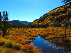 Beaver ponds on Tennessee Pass, Colorado 2013.