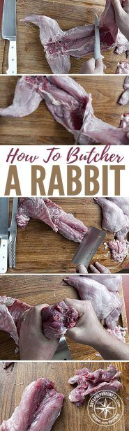 How To Butcher a Rabbit — Whether you're homesteading or prepping for when SHTF, you are undoubtedly sharpening your hunting., trapping, and foraging skills. Rabbit traps are fairly easy to set up, and these creatures provide an excellent source of protein that will see you through all of your chores.