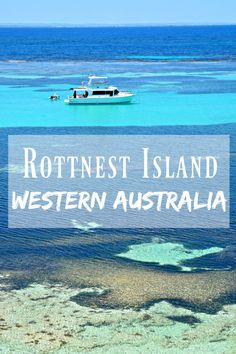 *Pin for Later* The dreamiest beaches and cutest Quokka's on Rottnest Island in Western Australia!
