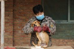 Elderly Chinese Women Wake up at 4AM Every Day to Care for 1,300 Stray Dogs