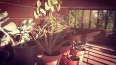 Cactulandia #cactus