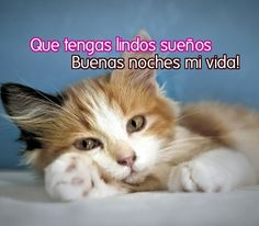 Frases De Amor En Imagenes De Gatitos Te Amo Encouragement Care