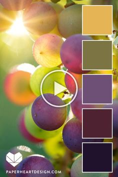 Sun Inspired Color Palettes - Sunset in grape vine. 6 Sun Inspired Color Palettes – Sunset in grape vine. 6 Sun Sun Inspired Color Palettes - Sunset in grape vine. 6 Sun Inspired Color Palettes – Sunset in grape vine. Color Schemes Colour Palettes, Colour Pallette, Color Palate, Color Combos, Autumn Color Palette, Sunset Color Palette, Decoration Palette, Design Seeds, Colour Board