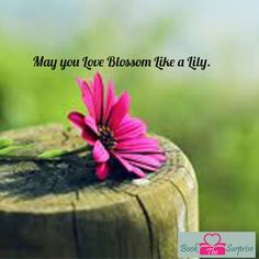 May you #love blossoms #like a lilly. #party #giftideas #bookthesurprise