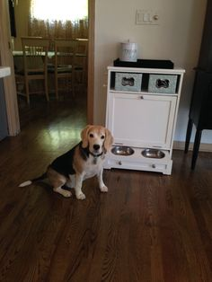 My beagle has his own kitchen cabinet!