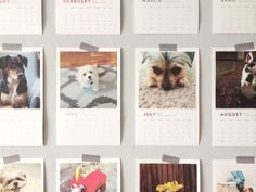 bloggers love cats & bloggers love dogs // a calendar fundraising project!