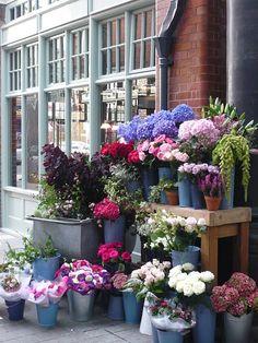 Shop of flowers three