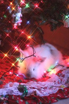 Somebunny likes the Christmas lights!