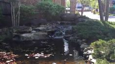 704-816-0526 Charlotte 864-381-7663 Greenville and Asheville Platinum Ponds and Lake Management #pondmanagement Algae, aquatic weeds, chara, curly leaf pondweed, eurasion watermilfiol, hydrilla/ elodea, naiad, bladderwort, coontail, sage pondweed, american pondweed, cattails, duckweed, southeastern pond management, south east pond management, fish pond management, farm pond management, lake pond management, large pond management, pond maintenance