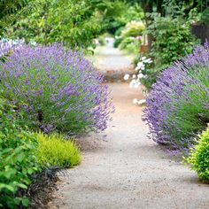Giving a gift to their Seattle neighbors, homeowners Dan Corson and Berndt Stugger planted their hellstrip (and adjacent border) with symmetry, vibrant colors, and—best of all—sweet-smelling lavender to relax anyone who moves through the foliage and flowers.