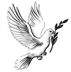 Picture of White dove with olive branch stock photo, images and stock photography. Peace Dove Tattoos, White Dove Tattoos, Dove With Olive Branch, Dove And Olive, Memorial Tattoos, Bird Drawings, Tattoo Drawings, Dove Drawing, Olive Branch Tattoo
