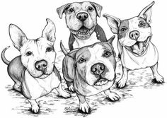 Four silly, happy, smiling pittie faces captured so beautifully in this  drawing by artist Laurie J Grove.Laurie's artwork is beautifully printed on high quality Hahnemuhle print Paper with pigmented inks rated to last over 100 years. This paper is slightly textured which is very close to the look, weight, and feel of the paper that she creates her drawings on.Unmatted Unframed. The print is signed on the back.Other sizes available upon request.