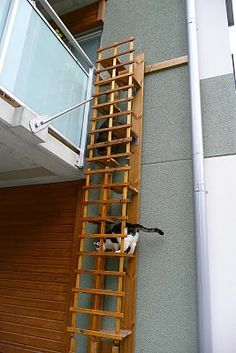 CAT -LADDERS: Stockholm. Great garden room or catio design. #cats #catio #CatStairs
