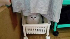 빨래 속에 숨어서...