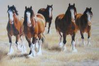 CLYDESDALE DRAFT HORSES CROSS STITCH PATTERN