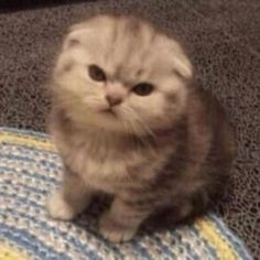 Cute Ferrets, Funny Cute Cats, Cute Baby Cats, Cute Funny Animals, Image Pinterest, Cat Icon, Cute Memes, Cat Stickers, Cat Lovers