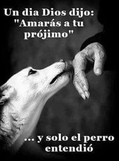Love Pet, I Love Dogs, Cute Dogs, Der Steppenwolf, Animals And Pets, Cute Animals, Spanish Inspirational Quotes, Spanish Quotes, Dog Quotes