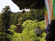奈良へおこしやす♪
