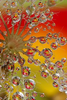 color pallet palette inspiration water Dew drops  orange red yellow green sunrise silver white gold