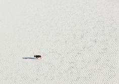 A vida selvagem da África vista de cima