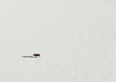 Aerial Photos of Botswana Wildlife
