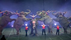 On Sunday, the elephants of Ringling Bros. will perform for the last time, signaling a turning point in our society's tolerance of wild animal acts. Ringling Brothers Circus, Ringling Circus, Baby Rhino, Le Clown, Save The Elephants, Animal Protection, Create Awareness, All Gods Creatures, Gentle Giant