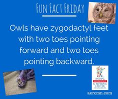 Did you know? #owlfacts #FunFactFriday #zygodactylfeet #animalfacts #AERC #TwinCitiesanimalhospital