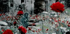 Rose among her namesake - and favorite - flowers. (Gif from Dracula Untold)