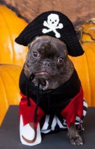 Knitted pirate dog costume