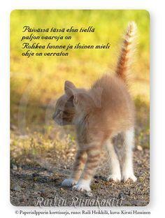 Kuvahaun tulos haulle rohkaisu runo Finnish Words, Kangaroo, Encouragement, Cats, Animals, Happy, Inspiration, Baby Bjorn, Biblical Inspiration