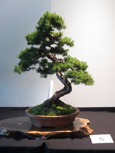 Plants, Tree, Small Japanese Garden, Bonsai Tree, Succulent Bonsai, Japanese Garden, Flowers