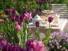 Tulipa 'Mistress' (Triumph Tulip) - Jardins Sans Secret