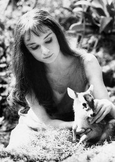Audrey Hepburn Had A Pet Deer Named Pippin.I absolutely love Audrey Hepburn! Pet Deer, Baby Deer, Divas, Natalie Wood, Rita Hayworth, Brigitte Bardot, Classic Hollywood, Old Hollywood, Hollywood Fashion