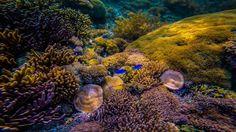 Red Beach: The World's Best Snorkeling Location -DivergentTravelers.com #indonesia #redbeach #snorkeling #underwater #coralreef #findingnemo #beaches