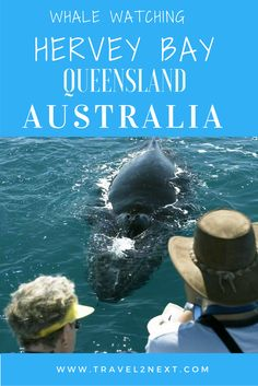 Hervey Bay: Whale Watching. There's no doubt in my mind that Hervey Bay is the best place in the world to watch whales.