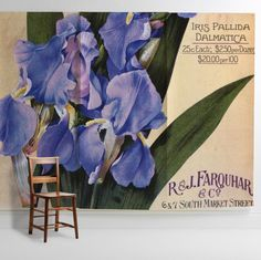 'Iris Pallida Dalmatica' Mural - New York Botanical Garden Collection from £60 per sq/m | Shop Cushions & Wall Murals at surfaceview.co.uk
