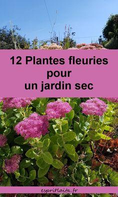 12 plantes vivaces pour un jardin sans arrosage et sans travail. Photos de mon jardin breton sec en été. Pour faire des économies d'eau au jardin