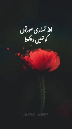 Best Islamic Images, Best Islamic Quotes, Muslim Love Quotes, Love In Islam, Islamic Phrases, Islamic Videos, Beautiful Quotes About Allah, Beautiful Words Of Love, Beautiful Islamic Quotes