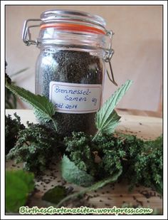 Kräuter Nettle seeds How To Choose A Shelving System Shelving provides one of the most efficient met Edible Wild Plants, Edible Flowers, Home Recipes, Aloe Vera, Health And Beauty, Healthy Life, Natural Remedies, Herbalism, Mason Jars