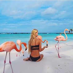 Stamp #647 - Aruba : Feed Flamingos on the beach! You can feed flamingos on the beach in Aruba on Renaissance island. My golden tip bring some quarters so you can buy flamingo food and you will have all the flamingo's around you all day long  Thank you @jennasilver_ for leaving your #ShareYourStamp!!  For more awesome #travel and #wanderlust tips and #adventure download the Stamp Travel #App Today. The link is in our bio!