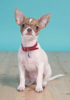 Meet the newest #moddog, Rigby!